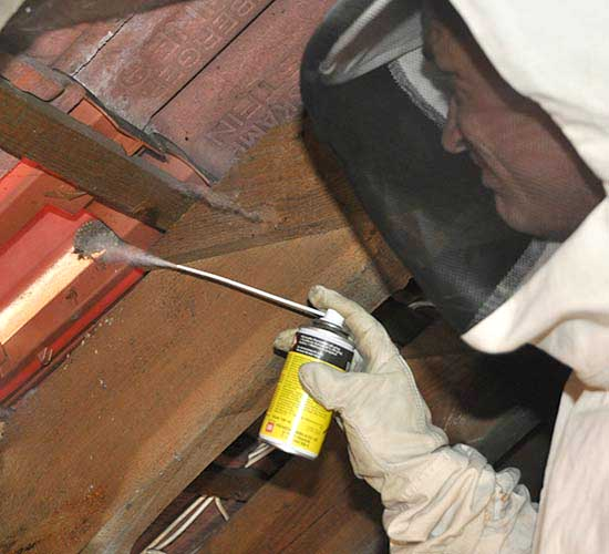 Insektenbekämpfung - Wespennest auf Dachboden